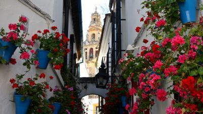 Cordoba desde Sevilla